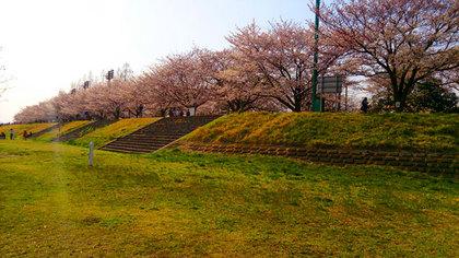140401sakura.jpg