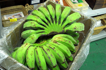 FRESH GREEN BANANAS